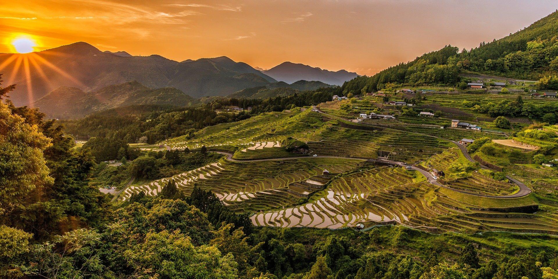 Reisproduktion in Zeiten globaler Erwärmung